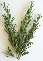 Herb of the Spell: